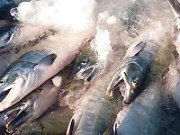 永徳 鮭乃蔵の写真