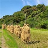 米屋ふくち食彩王国の画像