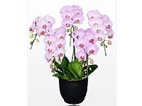 胡蝶蘭園.comの画像5