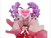 胡蝶蘭園.comの画像3